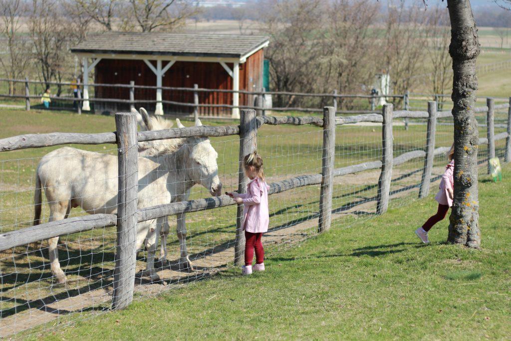 schlosshof deti krmia zvierata